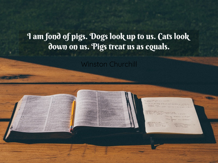 1502754719487-i-am-fond-of-pigs-dogs-look-up-to-us-cats-look-down-on-us-pigs-treat-us-as-equals.jpg