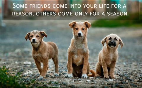 some friends come into your life for a reason others come only for a season...