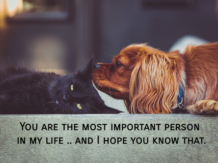 you are the most important person in my life and i hope you know that...