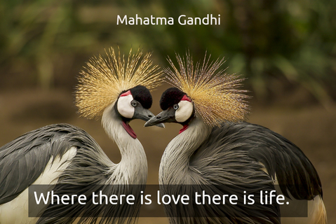 where there is love there is life...