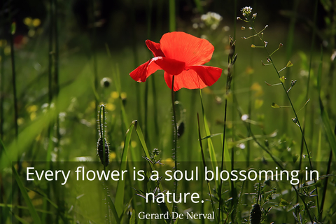 every flower is a soul blossoming in nature...