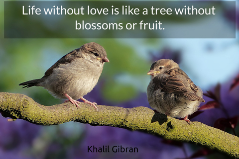 life without love is like a tree without blossoms or fruit...