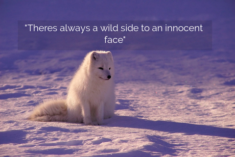 theres always a wild side to an innocent face...