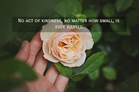 1563560152970-no-act-of-kindness-no-matter-how-small-is-ever-wasted.jpg